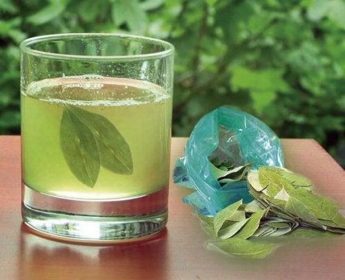 Chá de folhas de abacate para combater pedras nos rins