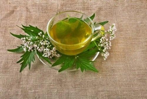5 ervas medicinais para tratar a depressão