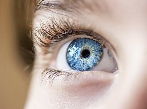A abóbora protege a saúde da visão