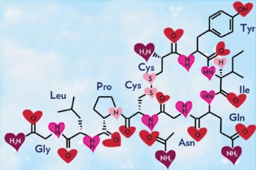 Fórmula química do amor, a oxitocina