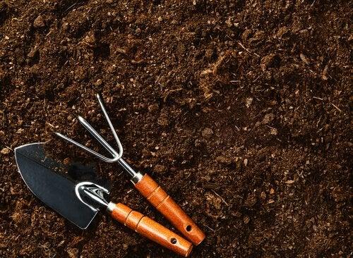 Preparar o solo para cultivar mirtilos em casa
