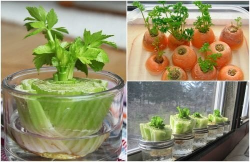 5 vegetais que podemos replantar com simples truques