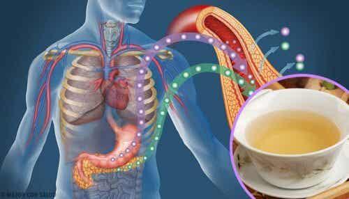 4 infusões para reduzir o açúcar no sangue