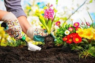 Mini jardim em casa: ideias para montar o seu