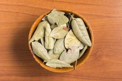 Chá de boldo ajuda a aliviar a dor cervical