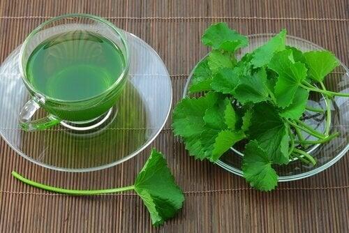Salsa para combater a amenorreia ou falta de menstruação