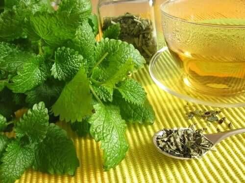A infusão de melissa é ideal para favorecer a digestão e reduzir a formação de gases no intestino