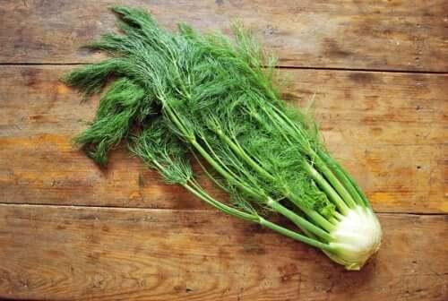 As sementes de funcho são populares por suas propriedades digestivas e anti-inflamatórias