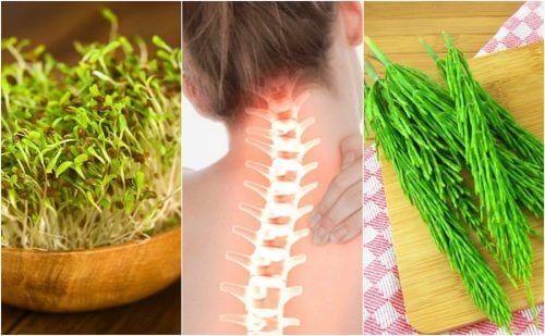 7 plantas medicinais para cuidar da saúde óssea