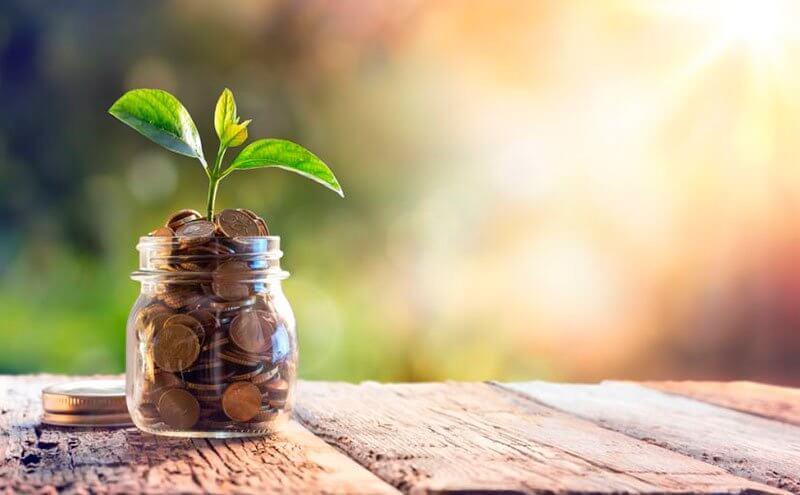 Plantinha crescendo ao sol em um pote de moedas