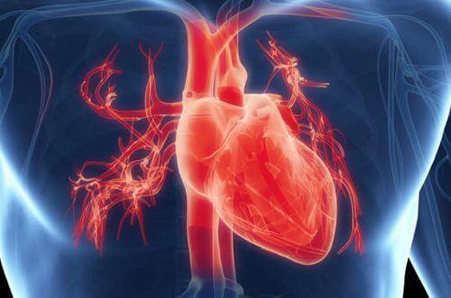 O ritmo cardíaco pode ser alterado pelo excesso de trabalho