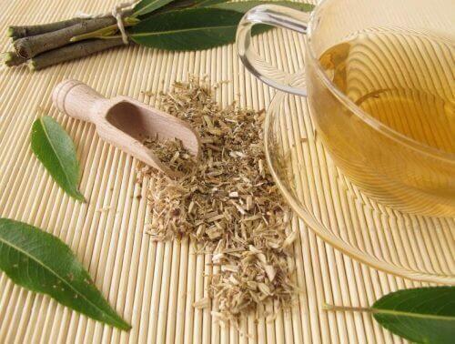 Chá de salgueiro para melhorar a circulação
