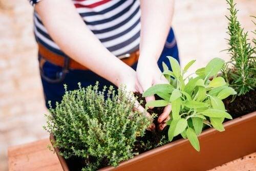 Mini jardim no vaso