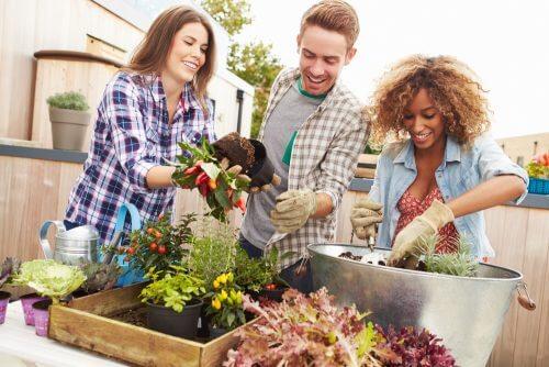 Pessoas montando um mini jardim