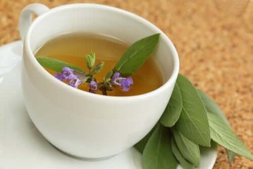 O poder adstringente e expectorante das folhas de sálvia é um bom complemento para promover o alívio da coceira na garganta