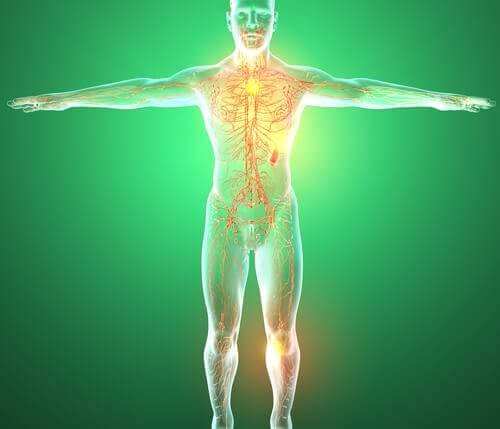 Sistema linfático em corpo humano