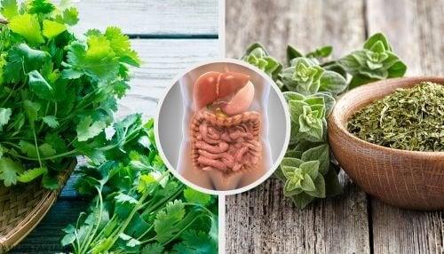 Benefícios das infusões de ervas para a saúde
