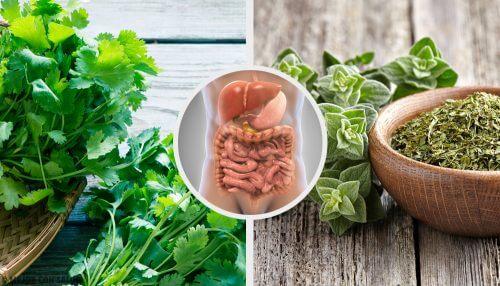 5 infusões de ervas para desintoxicar o sistema digestivo