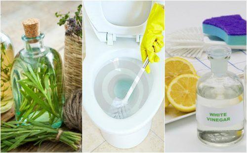 5 soluções ecológicas para desinfetar o banheiro