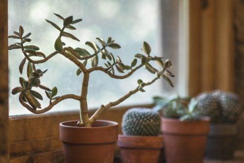 7 razões para ter plantas em casa