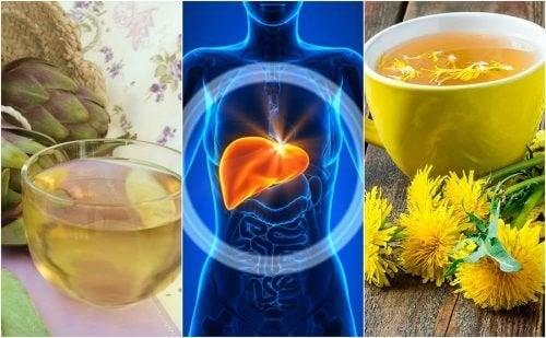 5 ervas para combater o fígado gorduroso naturalmente