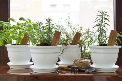 Crie sua própria horta de plantas aromáticas