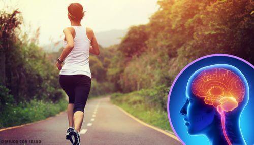 Quando deixamos de praticar exercícios nosso cérebro muda