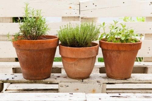 Horta de plantas aromáticas em casa