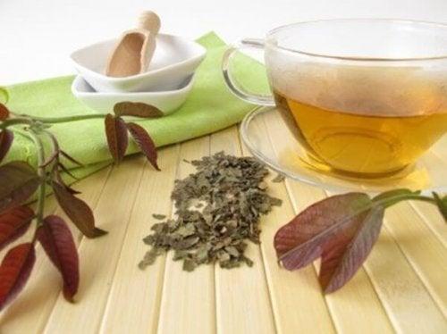 Chá de folhas de nogueira