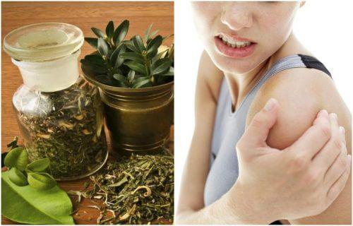 Prepare um álcool de ervas para aliviar as dores articulares