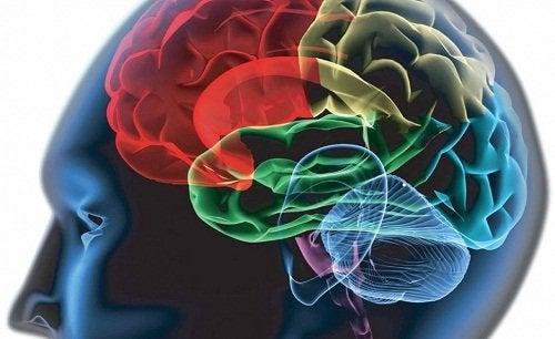 Função do cérebro ao não eliminar bem as toxinas