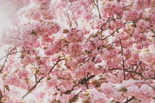Algumas flores podem causar rinite alérgica