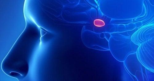Glândula pineal no cérebro