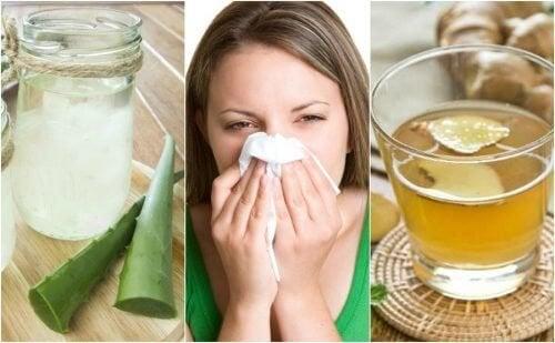 5 remédios de origem natural para acalmar a rinite alérgica