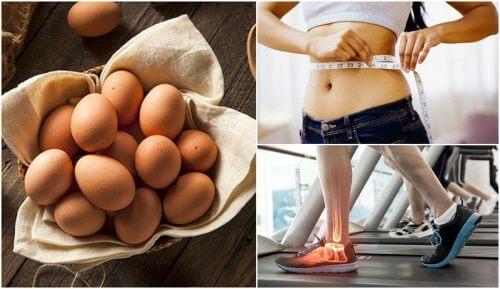 7 razões para comer ovos regularmente