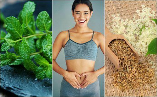 6 plantas curativas para cuidar da digestão
