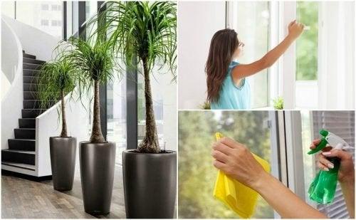 6 coisas que você pode fazer para melhorar a qualidade do ar da sua casa