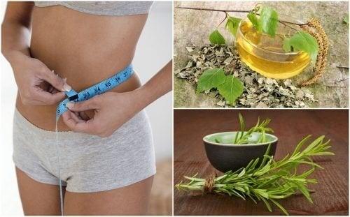 8 ervas saudáveis que ajudam na sua dieta para perder peso