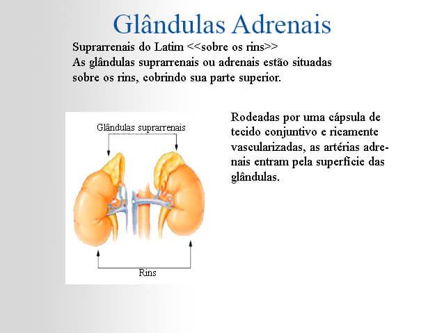 Desenho de glândulas adrenais