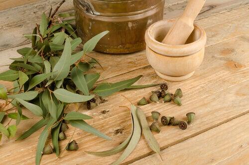 Folhas de eucalipto para combater as alergias