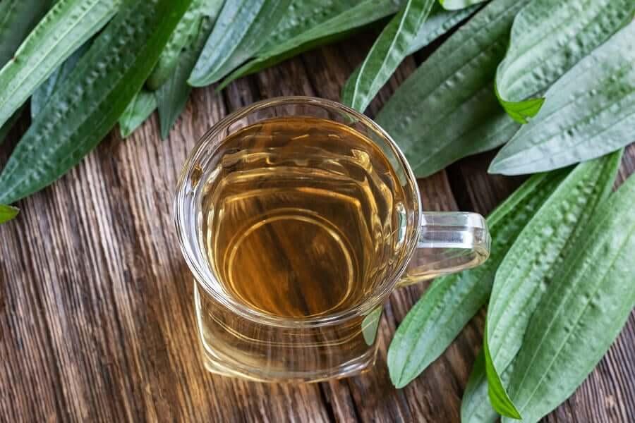 Remédios naturais para cuidar da garganta e da voz