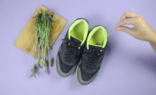 Lavanda pode ser usada para eliminar o mau cheiro do calçado