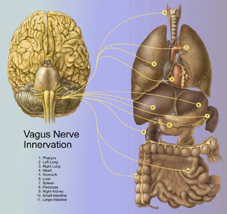 Cérebro de pessoas em coma