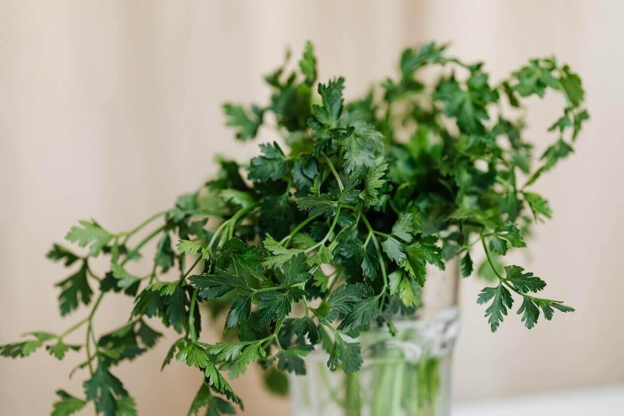 O chá de salsinha pode ser considerado um remédio alternativo para aliviar a queimação e a inflamação estomacal