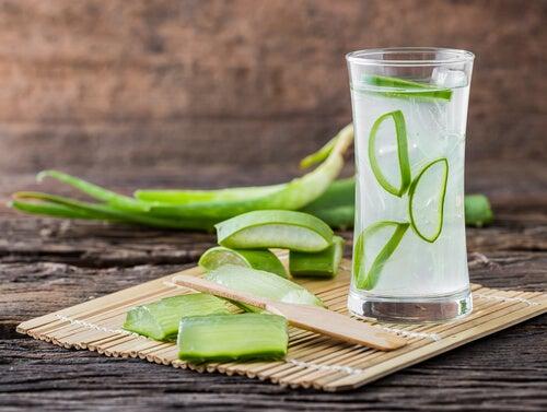 Suco de aloe vera contribui para o alívio das úlceras estomacais
