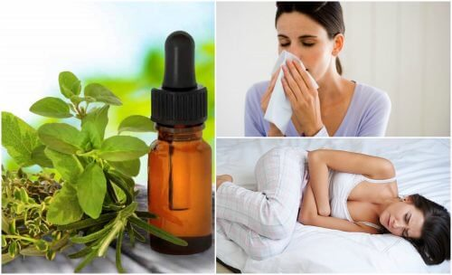 8 usos medicinais do óleo de orégano