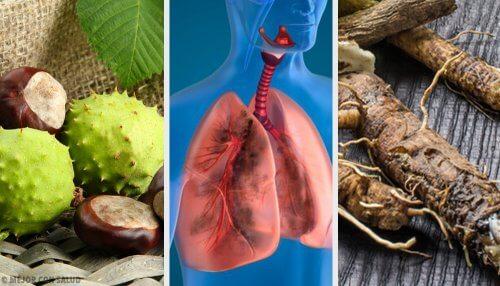 4 remédios caseiros para fortalecer os pulmões