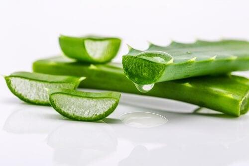 Aloe vera ajuda a manter o cabelo forte e saudável