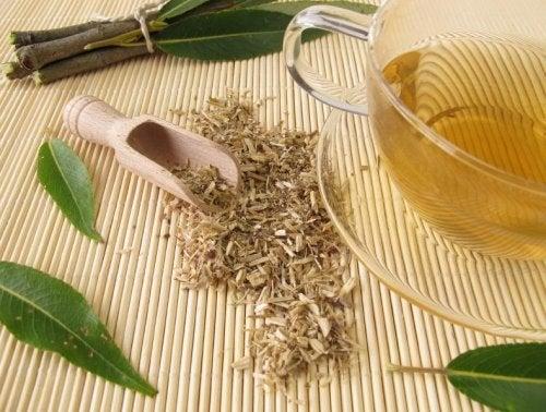 Chá de casca de salgueiro branco para o tratamento da artrite