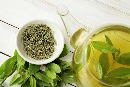 Chá verde ajuda a aliviar o couro cabeludo sensível.